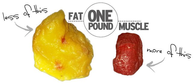 1 pound fat vs muscle