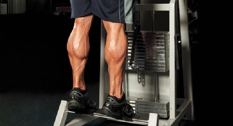 calf-muscles-anatomy